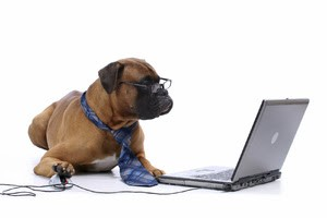 dog_with_laptop